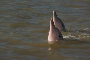 Sunset & Dolphins dolfijnen 2