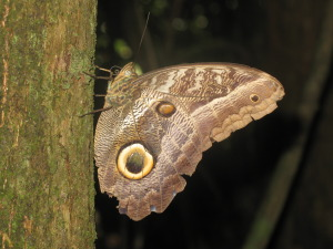 Suriname 315